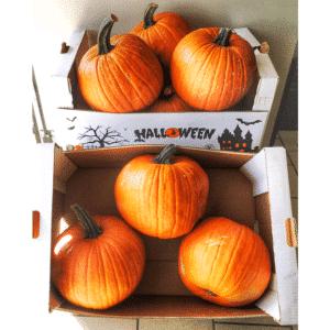 Zucca di Halloween da intagliare